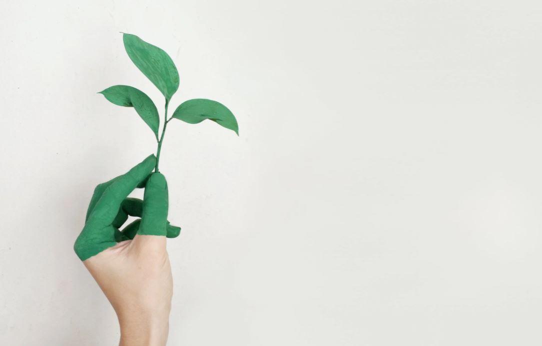 Nachhaltiger leben: Ideen für Ihren Alltag